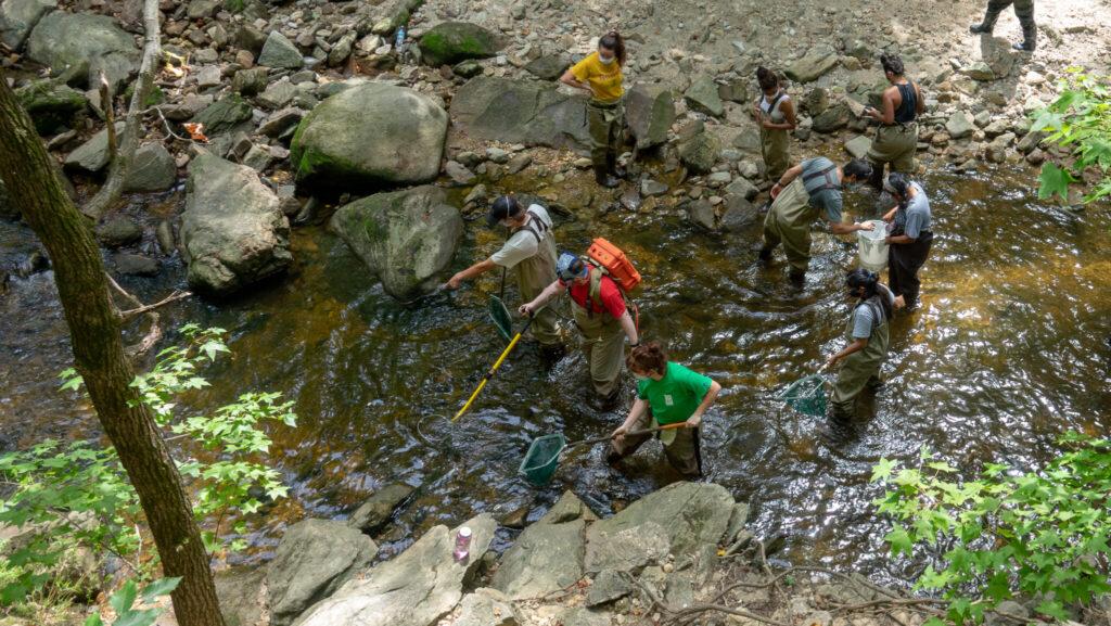 Students sampling for fish